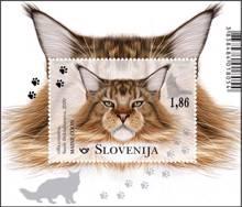 Živalstvo - mačke: maine coon - blok