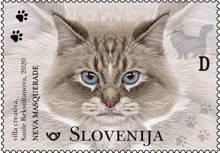 Živalstvo - mačke: Neva Masquerade D