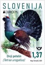 EUROPA - divji petelin